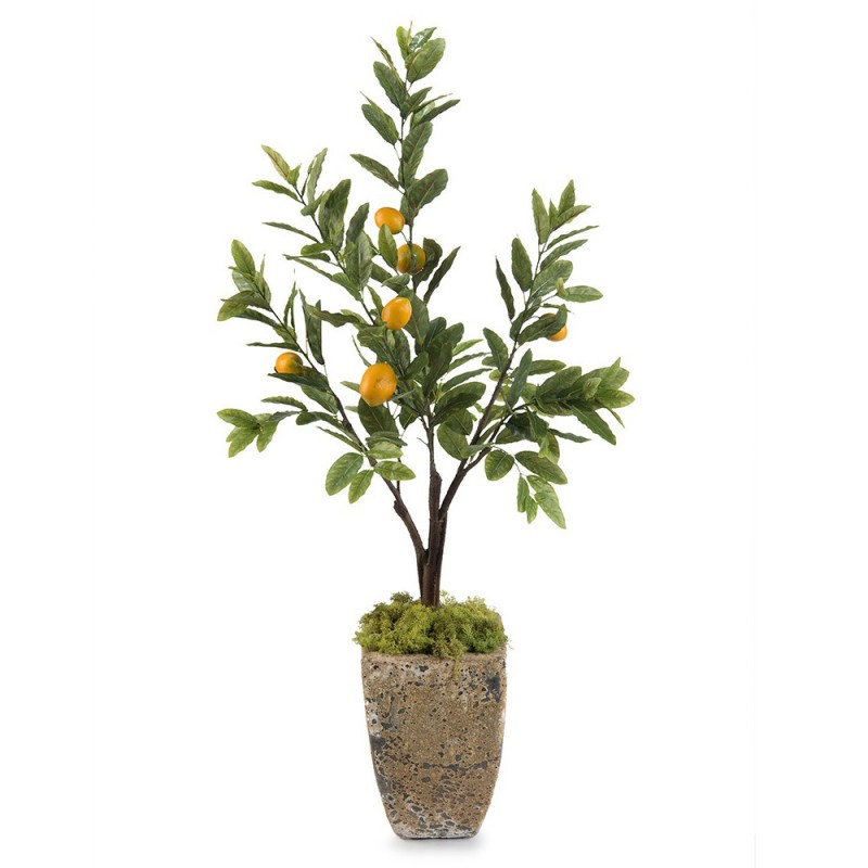 Лимонное дерево, John Richard (Америка)