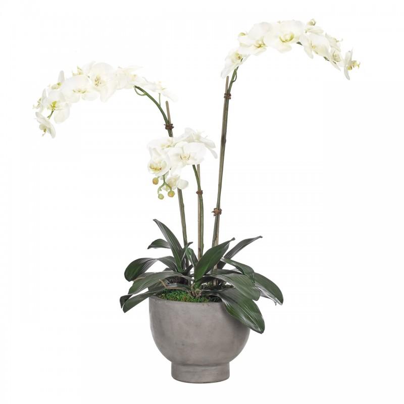 Белая орхидея в кашпо, NDI (Америка)